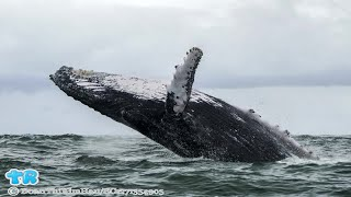 Watch: Humpback Whale Capsizes Boat in New Jersey | Gift Of Life