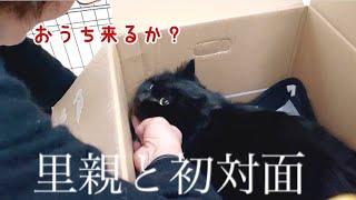 両親と保護した黒猫の初対面で名前まで決まってました!