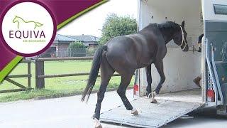 Gambar cover Das Pferd verladen