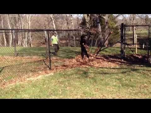 Perimeter Guarding Test Giant Schnauzer 'Duke' Personal Protection Dog For Sale