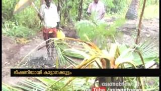 Wild Elephants Destroy Farmers' Crops In Idukki Tamilnadu Border