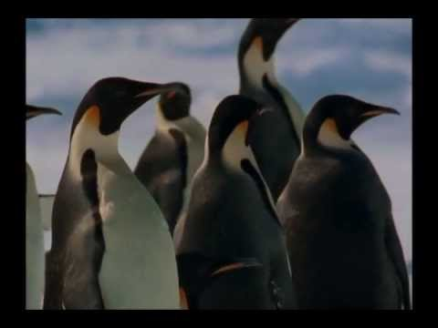 March Of The Penguins OST - The Harshest Place On Earth by Alex Wurman