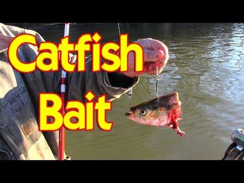 Skip Jack Catfish Bait
