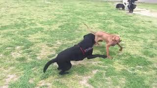 こんなふうにかけっこして遊ぶのも楽しいらしい。 犬とはあまり遊ばない...