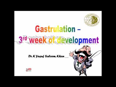 Lecture on Development during the 3rd week after Gestation....... by Dr. Yusuf