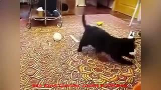 видео приколы про детей и животных смотреть