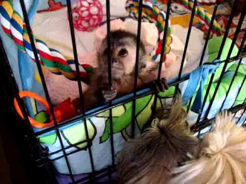 Baby Monkey Nala Gets Puppy Kisses Youtube