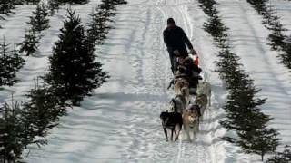 The Rocks Estate, Bethlehem, New Hampshire DOG SLED rides Part 1