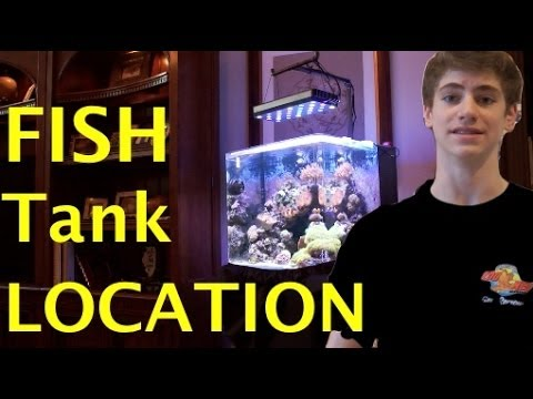 fish tank location where to place your fish tank youtube