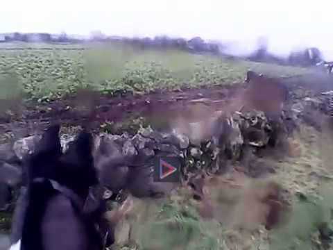 North Galway Hunt- Dillions