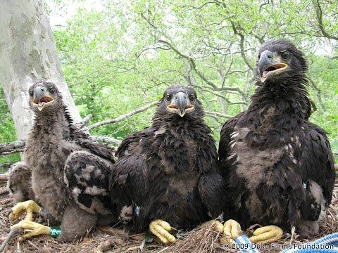 Duke Farms Eagle Cam