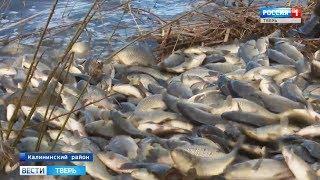 В Тверской области начали зарыблять водоемы