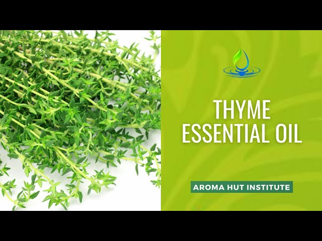 Thyme Essential Oil Benefits   Uses