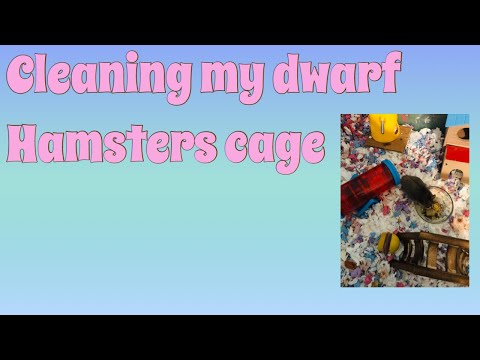 Cleaning my dwarf  hamsters cage🐹
