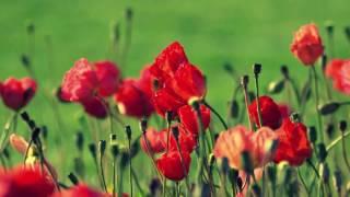 ✿Цветы❀ Релакс✿ Красивая музыка❤ Цветочное настроение✿
