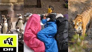 Overnatter i zoologisk have | Sleepover | Ultras Bedste | Ultra