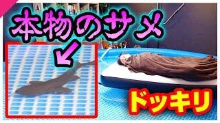目が覚めたら、サメが泳いでるプールの上で寝ていたら?【ドッキリ】