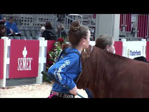 November 3 - Part 1 - Masterfeeds National Junior Beef Heifer Show  - Semex Ring of Excellence