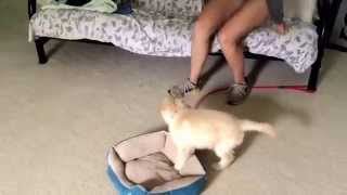 Emma's Daily Minutes - 3. Leash Training A Puppy