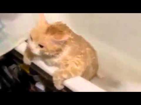 смотреть видео толстых в ванне