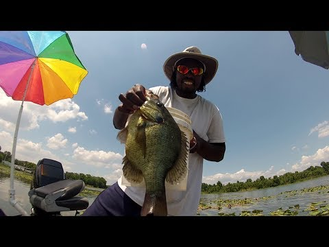 Shellcracker Fishing Catching Huge Monster Slabs