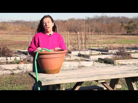 Ways to Store a Garden Hose : Great Gardening Advice