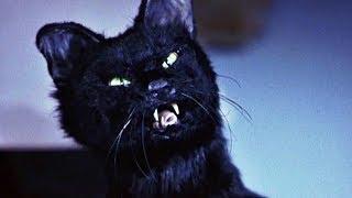 Синди Кэмпбелл против Кота | Очень страшное кино 2 | 2001