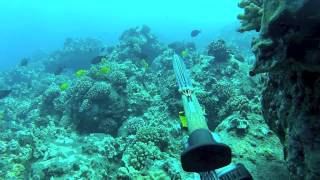Hawaii Spearfishing: SKS DIVE 13