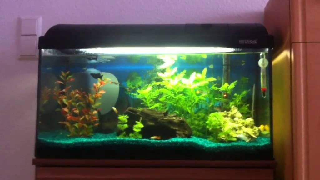 Aquarien Aquarium 54l Fische & Aquarien
