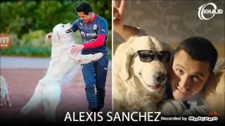Собаки футболистов!!!😄