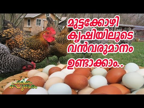 ORGANIC EGG PRODUCTION IN LAKESIDE FARM | HARITHAM SUNDARAM | KAUMUDY TV
