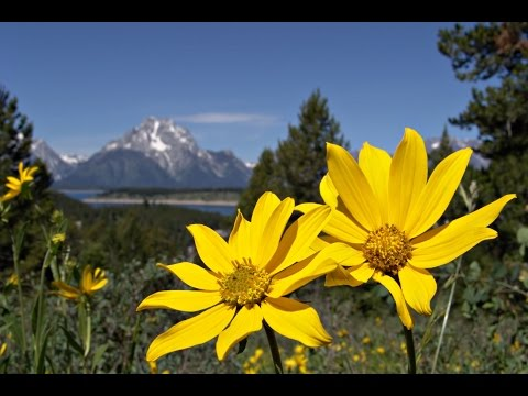 "Peaceful Music, Relaxing Music, Nature Music ""National Parks"" by Tim Janis"