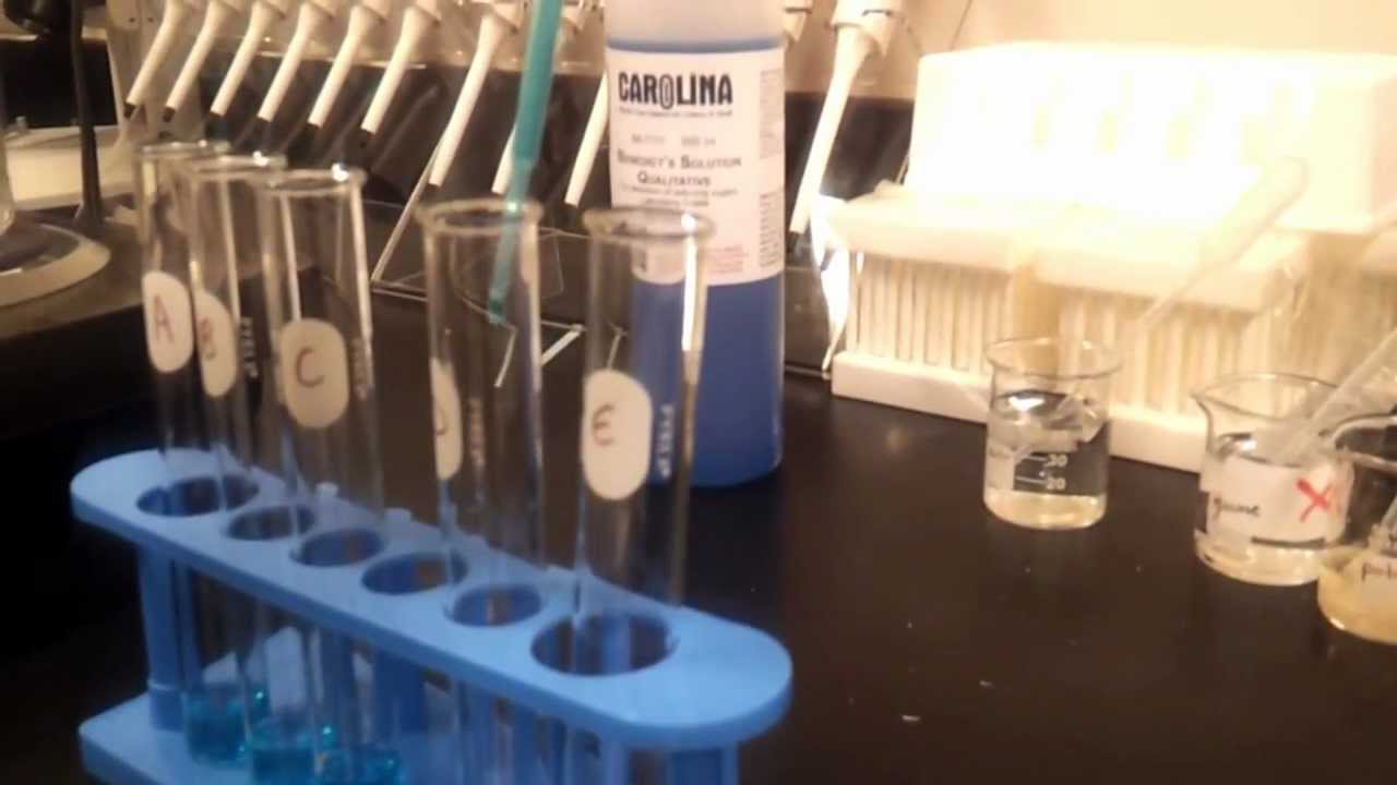 Testing for Simple Sugars with Benedict's Solution - YouTube