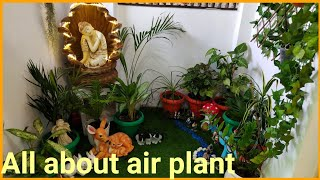 All about air plant|| exotic plants|| air plant care