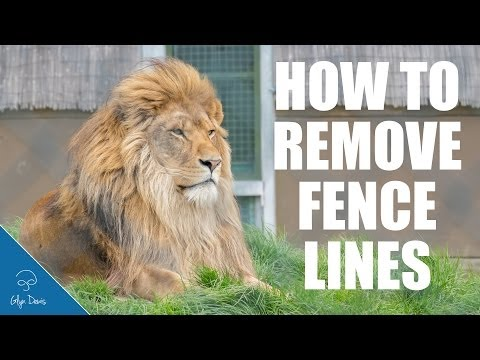 How to Remove Fence Lines: PHOTOSHOP TUTORIAL #49