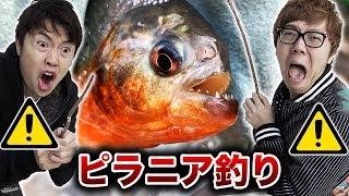 【危険】ピラニア釣りしてみたら怖すぎた。。。【超凶暴】 thumbnail