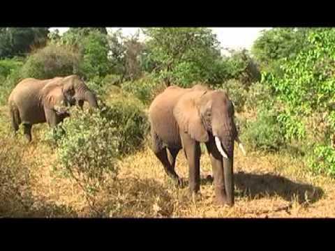 Video Tanzania - Kilimanjaro 2006