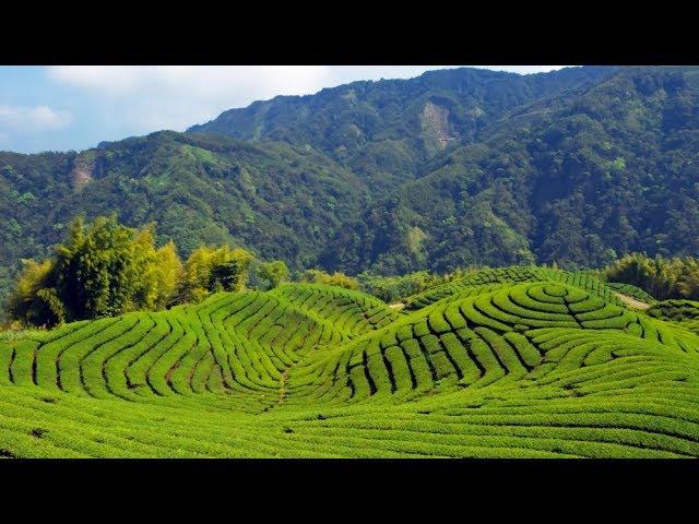 Tea of Taipei: Small-Group Tour