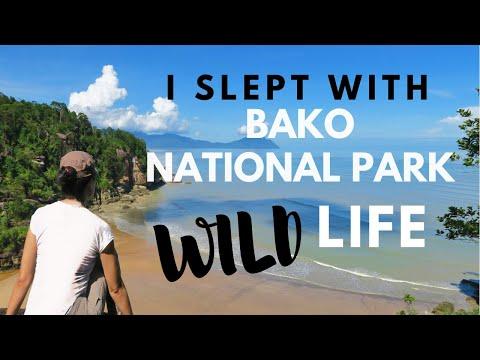MY WILDEST BORNEO  ADVENTURE | Bako National Park, Kuching