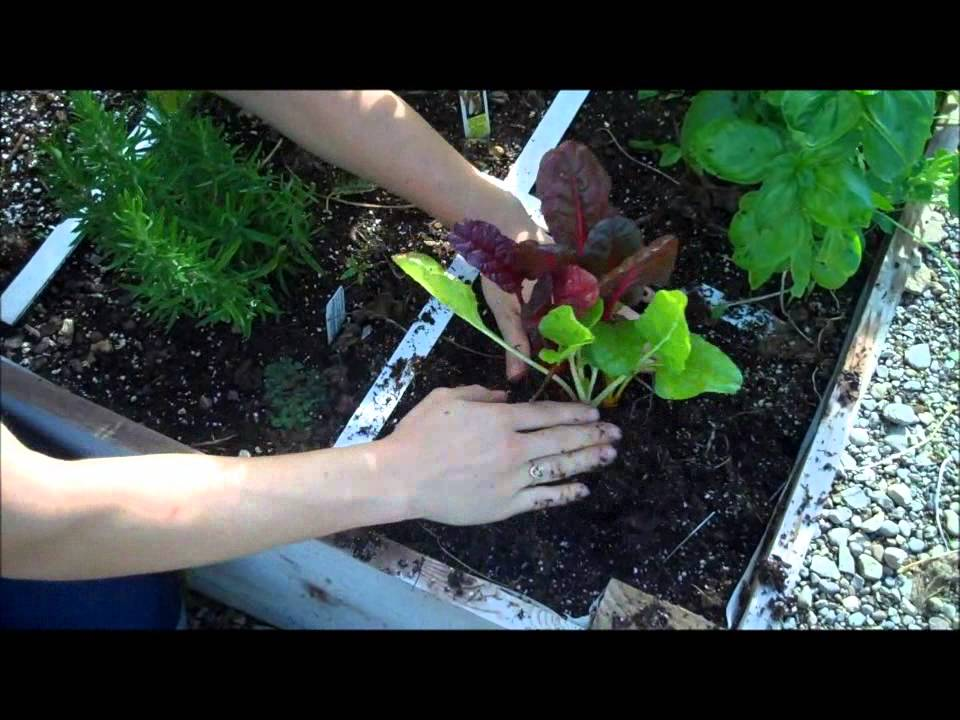 wilsons garden center in the garden with abby segment 18 - Wilsons Garden Center