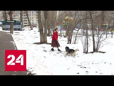 На какие уловки идут россияне, чтобы выйти на улицу во время карантина, и что их за это ждет