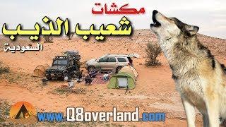 مكشات مع الذيابه في أم الجماجم - السعودية