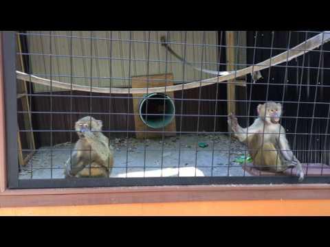 The Crafty Kidz Visit the Indian Creek Zoo in Lambertville, MI
