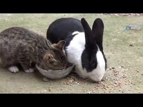 Tavşan İle Kedinin Dostluğu Görenleri Şaşırtıyor