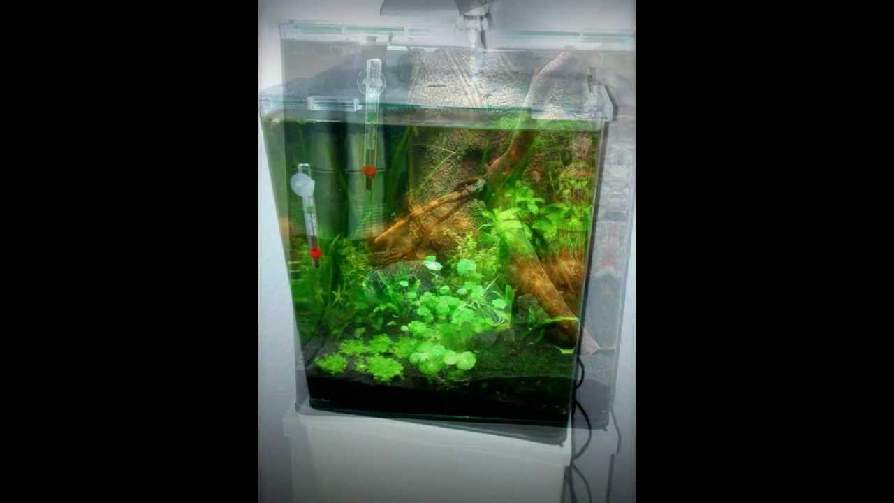 dennerle nano cube aquarium part i 30l neon tetra fishtank youtube. Black Bedroom Furniture Sets. Home Design Ideas
