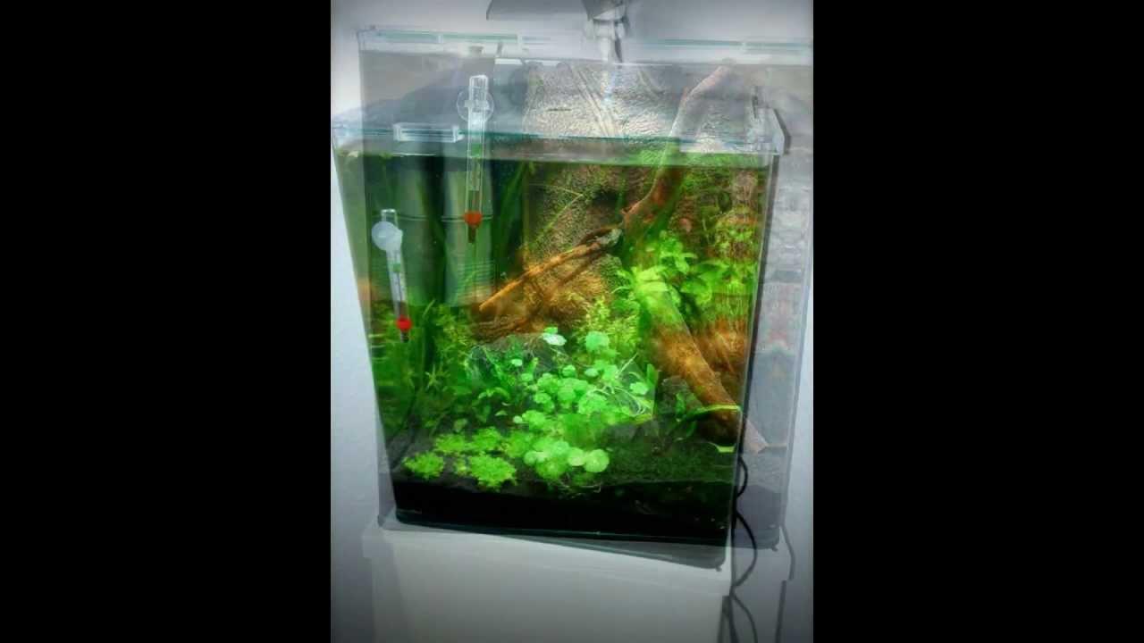 dennerle nano cube aquarium part i 30l neon tetra. Black Bedroom Furniture Sets. Home Design Ideas