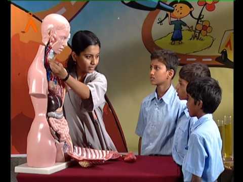 The Human Torso (Kannada)