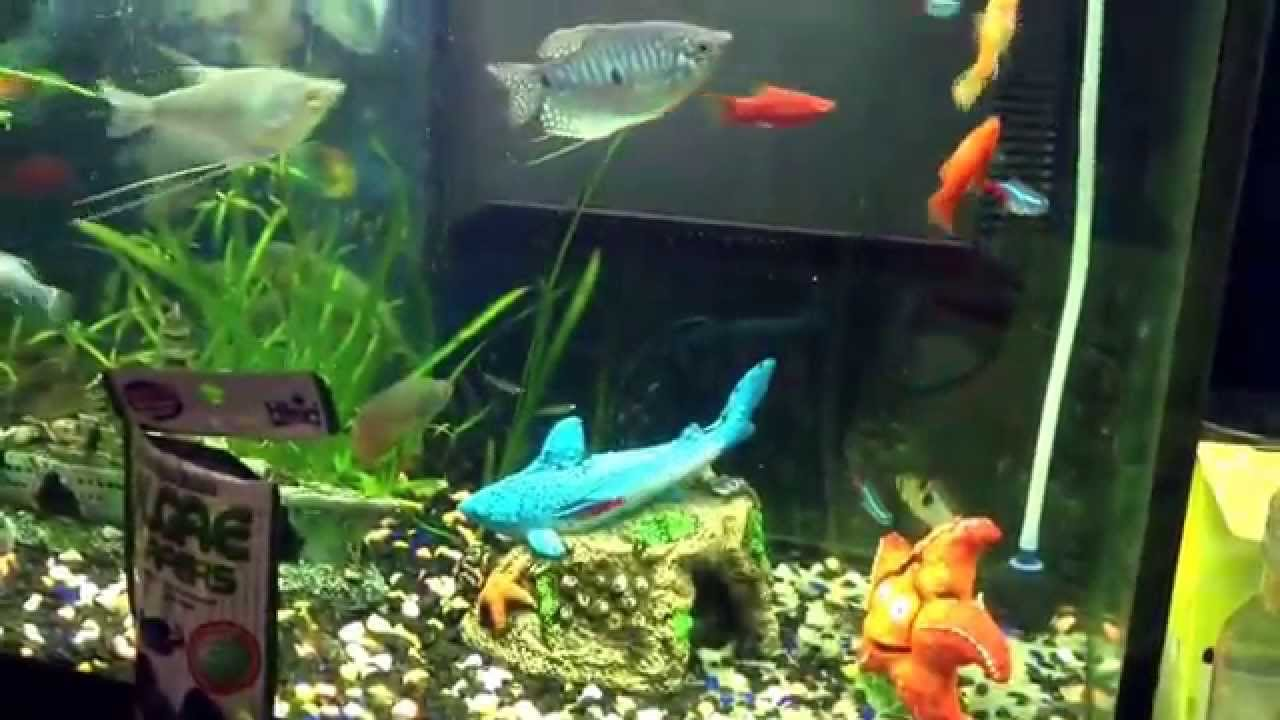 My fish tank update 1 frog new baby guppy fry youtube for Fish tank frogs