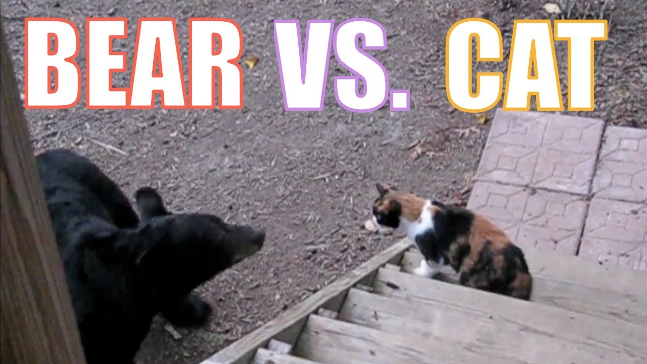 Dogs Versus Cats Youtube