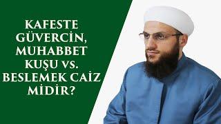 KAFESTE GÜVERCİN MUHABBET KUŞU vs BESLEMEK CAİZ MİDİR
